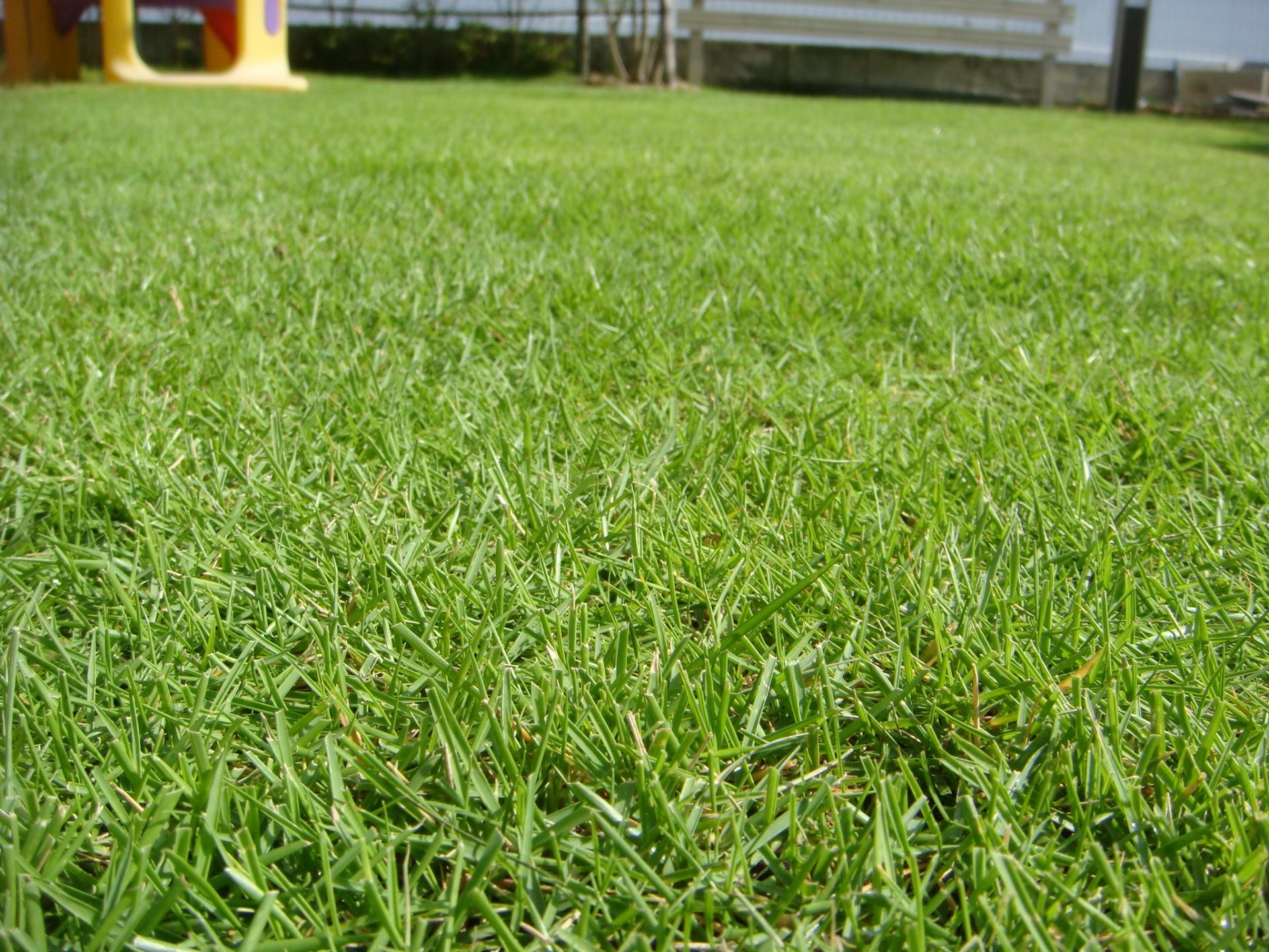 芝生TM9