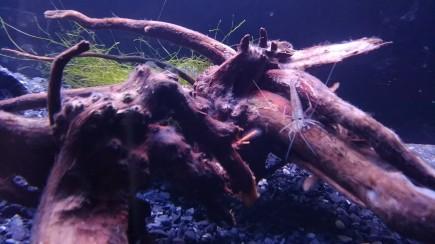 姫路熱帯魚