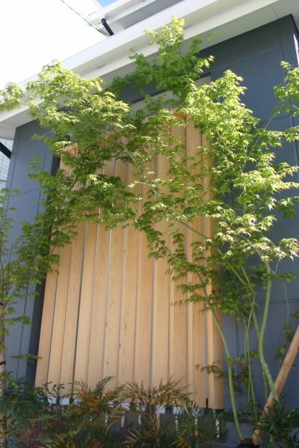重なり合うモミジの陰影が美しいファサード 姫路市N様邸2